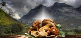 specialita-ai-funghi